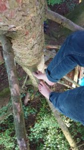 Nadelbäume sind harzig!