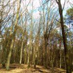 toller lichter Wald