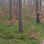 weicher Waldweg