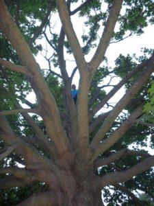 Auf dem Baum (von unten)